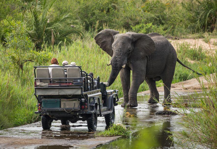 Carro em safari com elefante na África do Sul
