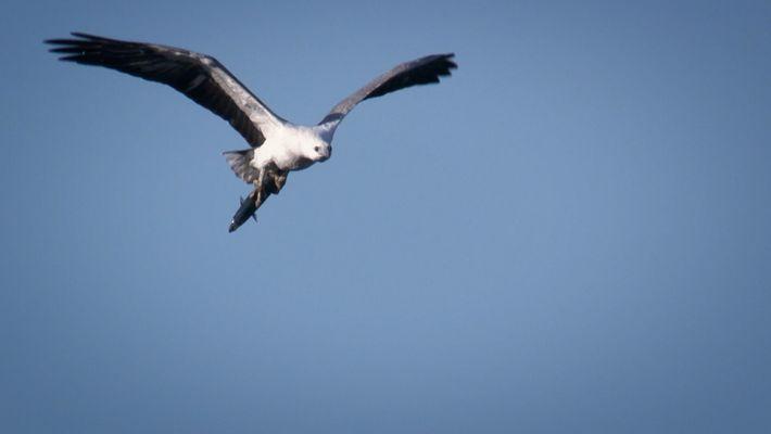 Veja como esta águia caça a 3 km de altura