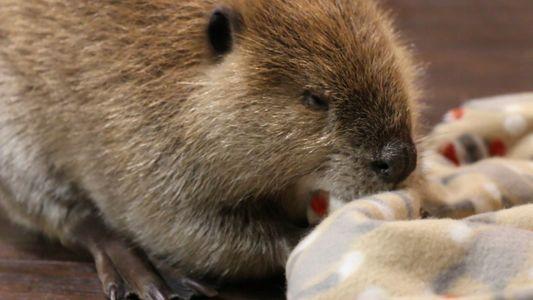 Estes Animais Resgatados Têm Uma Nova Missão