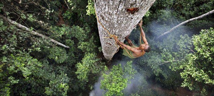 A trepar árvores