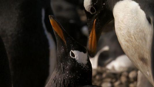 A história de amor de dois pinguins