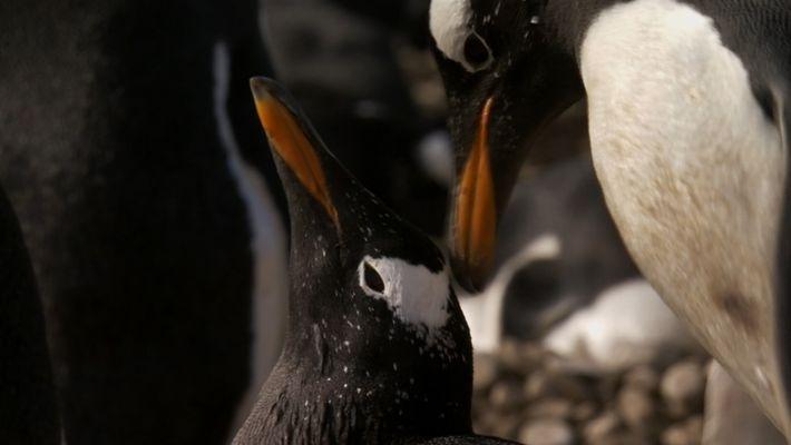 História de amor de dois pinguins