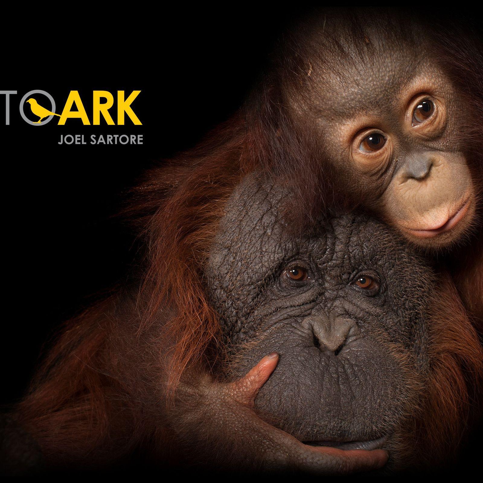 Exposição Photo Ark