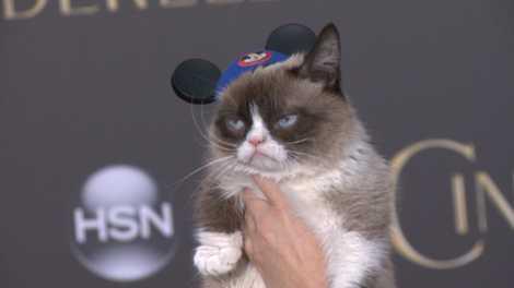 Porque é que a Internet Adora Gatos?