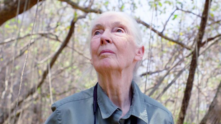 Promo - Jane Goodall: The Hope