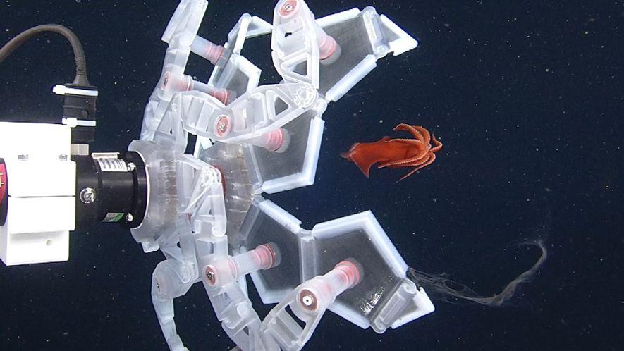 Veja Um Robot Que Apanha Animais Marinhos Gentilmente