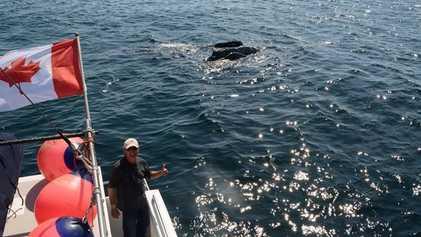 Joe Howlett: Vida (e Morte) Dedicada às Baleias