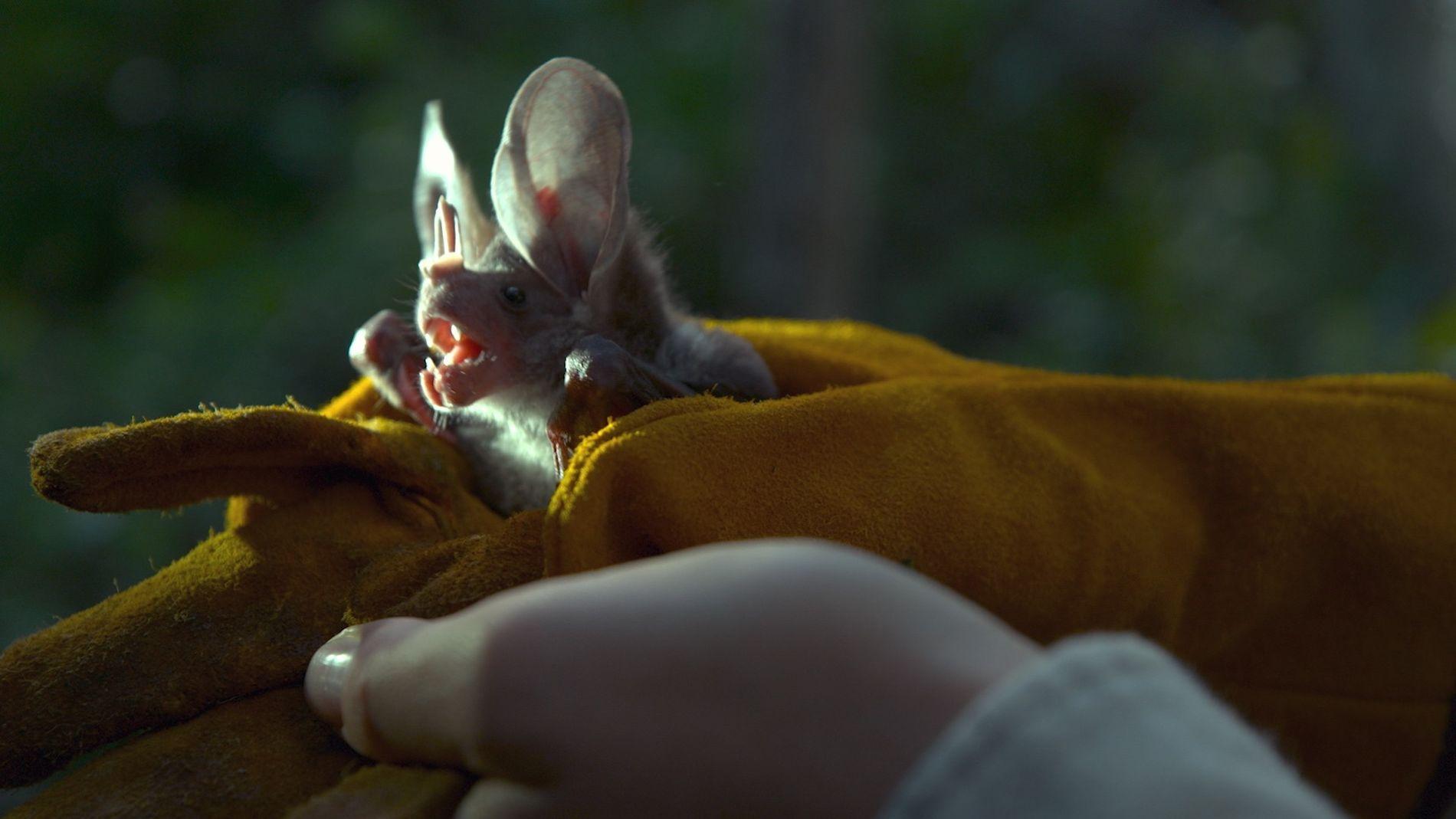 Uma Viagem Com Morcegos Pelo México