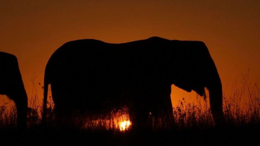 10 Curiosidades sobre os Elefantes
