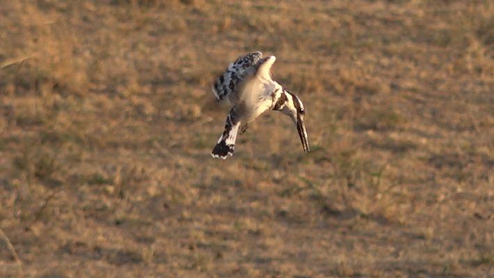 Safari de Pássaros ao Vivo