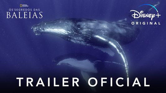 Secrets of the Whales Trailer PT