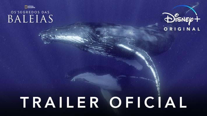 Os Segredos das Baleias - trailer