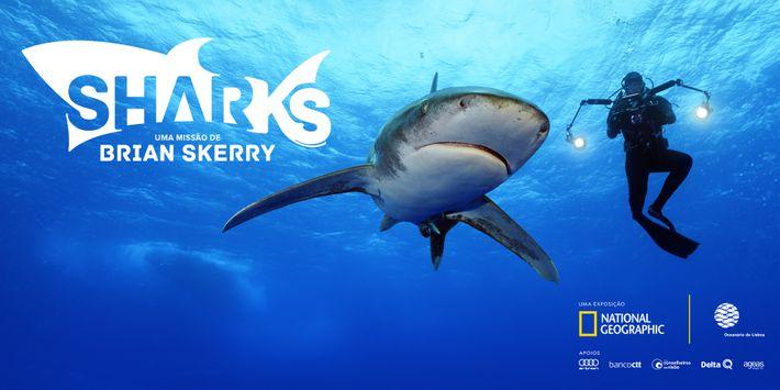 Exposição 'Sharks', no Oceanário de Lisboa