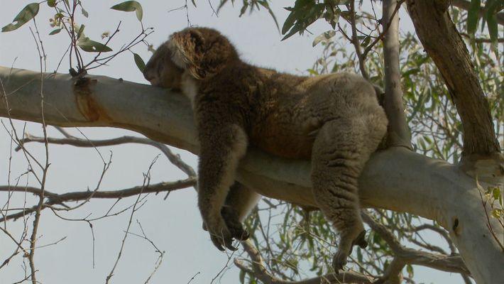 Wild Austrália with Ray Meyers