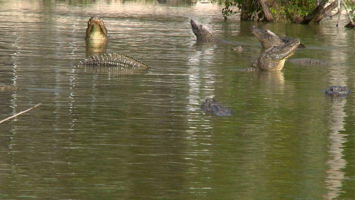 The Crocodrile
