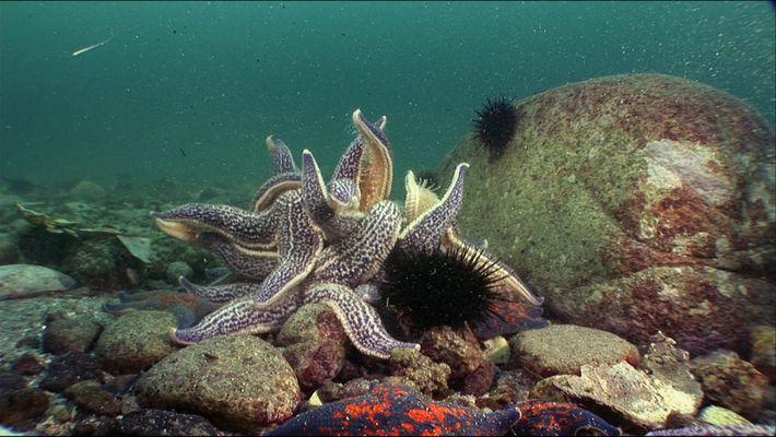 The Rimsky-Koordakov- a underwater paradise