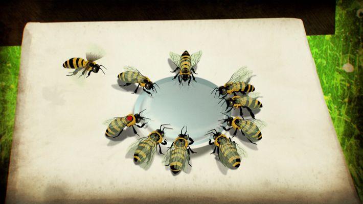 """Sabia que as abelhas conseguem """"falar""""?"""