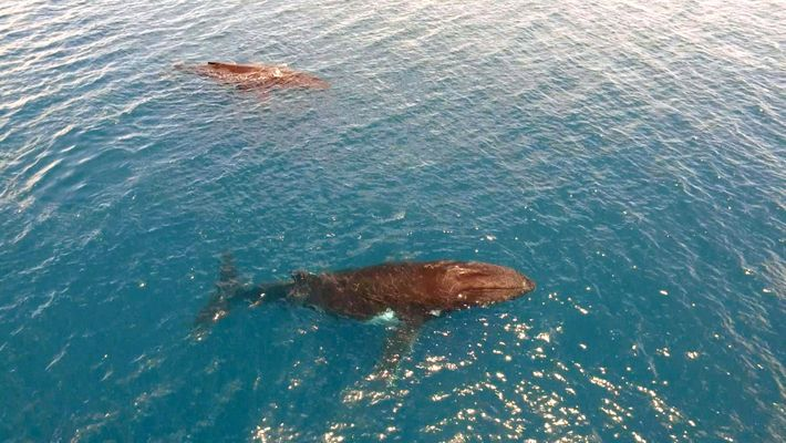 As Baleias de Austrália