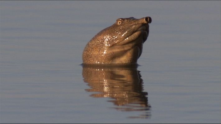 The turtles of the lake Khanka
