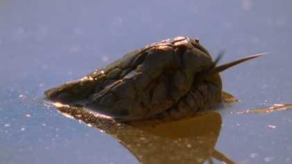 Esta é a criatura que merece o nome 'jaws' e não vive no mar