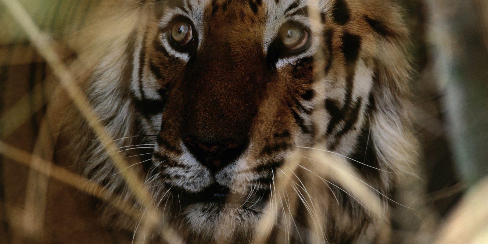 6 Animais Ameaçados e o que Pode Fazer Para os Ajudar