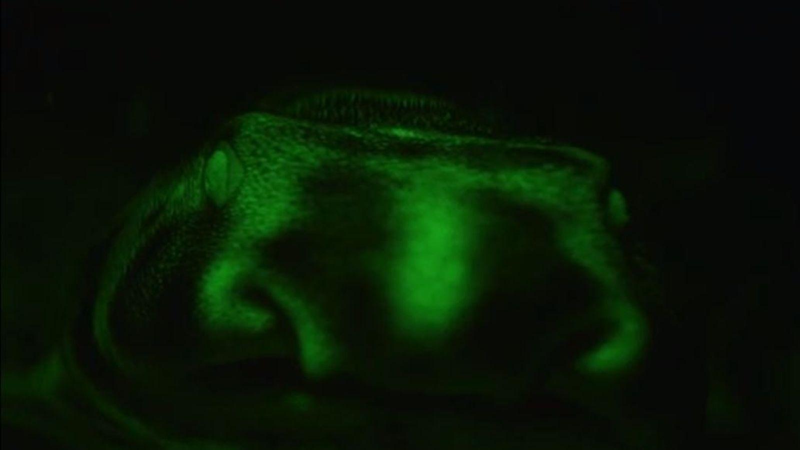 Veja Tubarões que Brilham no Escuro