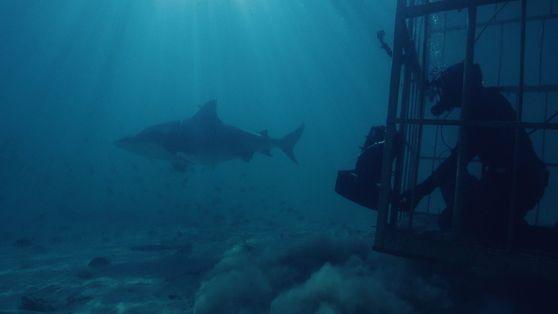Tubarões-buldogue e Visibilidade Vulcânica Zero | Volcano Sharks