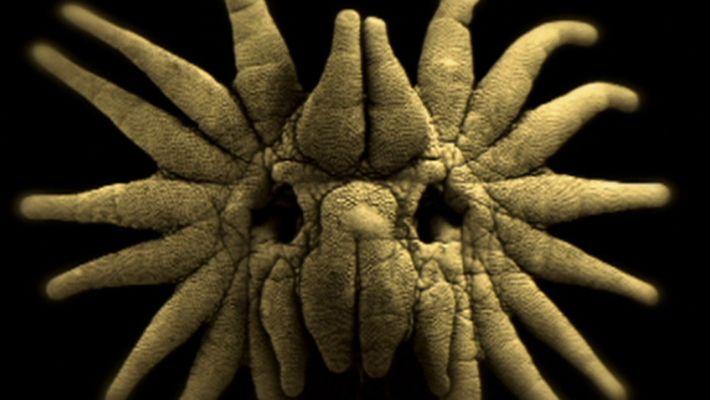 Esta toupeira-de-nariz-estrelado pode ser a criatura com a aparência mais estranha do mundo