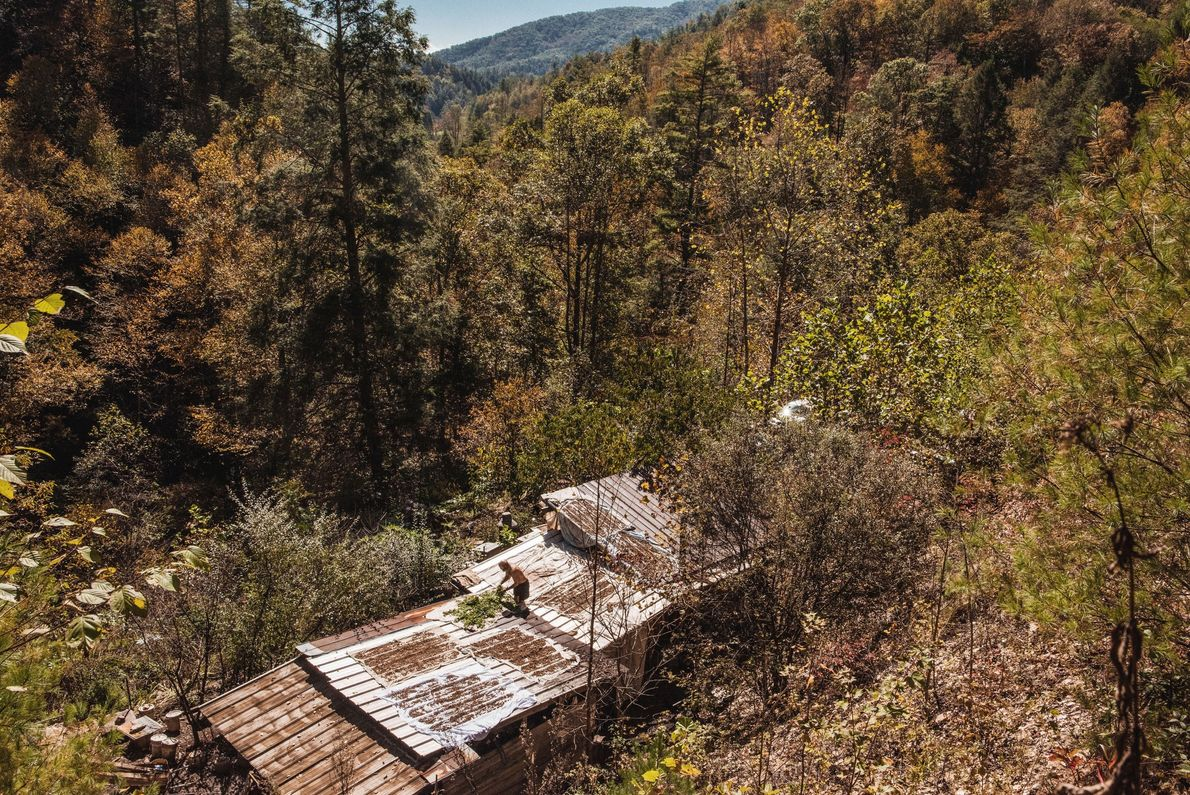 Comunidade humana na floresta
