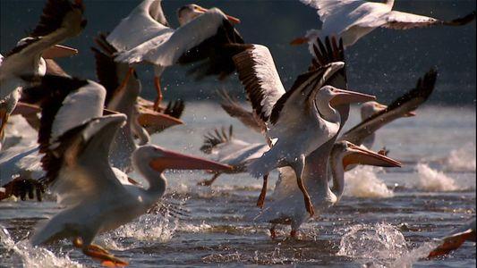 Dia Mundial das Aves Migratórias