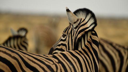 Imagens do Reino Selvagem em África