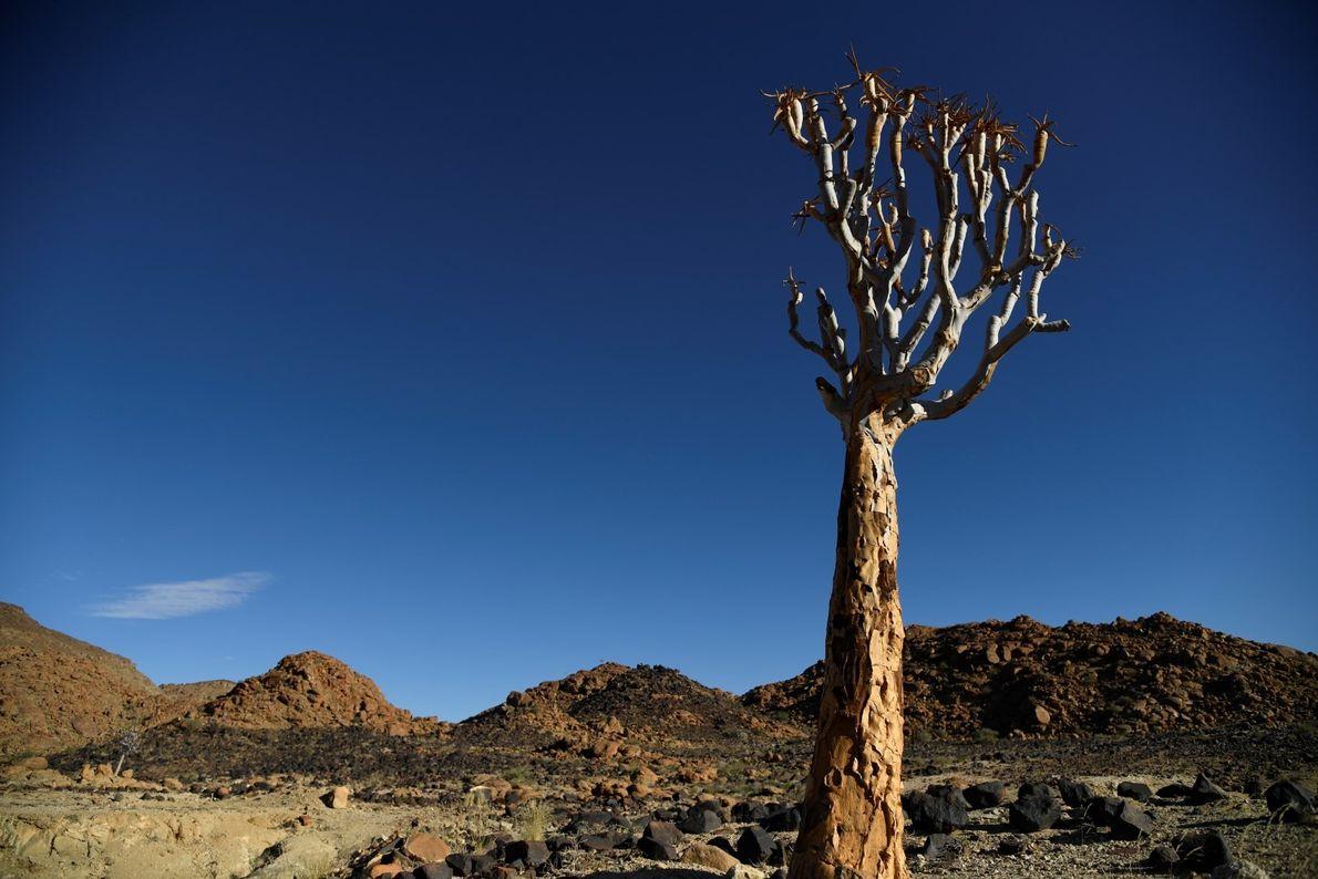 árvore solitária no caminho de Ai-Ais