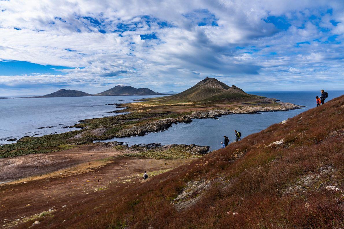 As Ilhas Malvinas são o lar da maior colónia de albatrozes-de-sobrancelha; 70% da sua população global ...