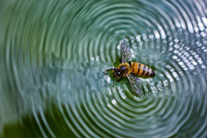 Tal como qualquer outra criatura, a abelha precisa de água para sobreviver. Durante o verão, uma ...