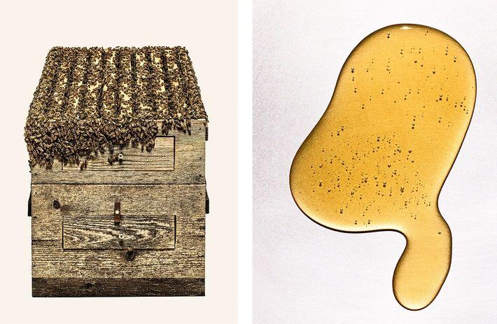 colmeia e poça de mel