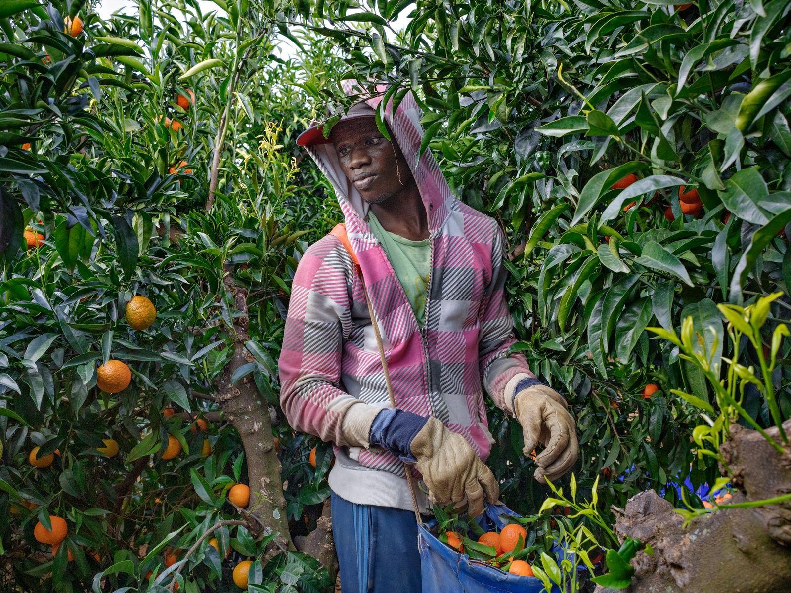 Em 2016, depois de abrir caminho desde o Senegal até à região agrícola no sul de ...
