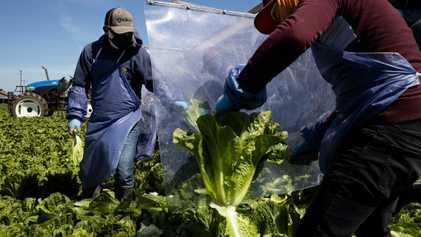 Estes 5 Alimentos Mostram Como o Coronavírus Afetou as Cadeias de Abastecimento nos EUA