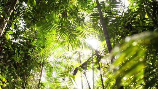 Algumas Florestas Tropicais Mostram Uma Resiliência Surpreendente à Subida das Temperaturas