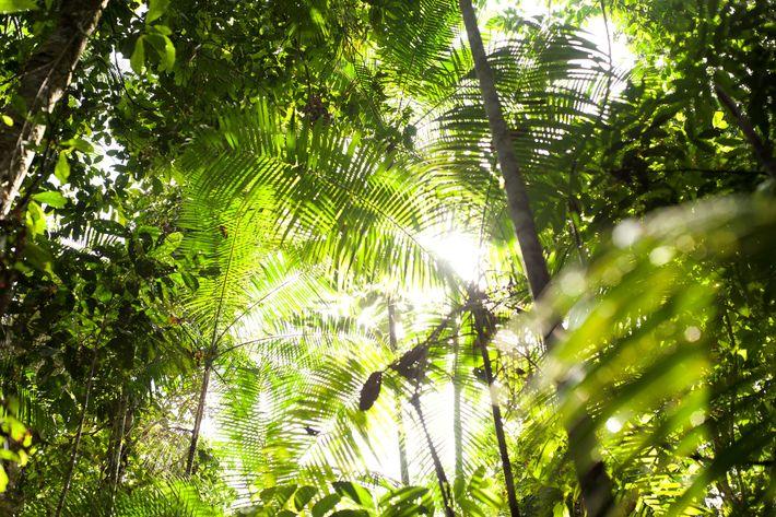 De acordo com uma nova investigação, para as florestas como a Amazónia, retratada na imagem, um ...