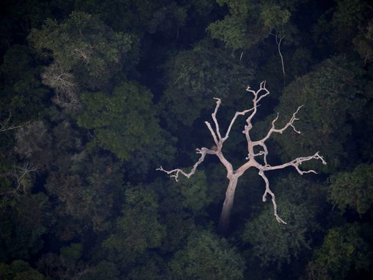 Amazónia Não Produz Realmente 20% do Oxigénio Mundial