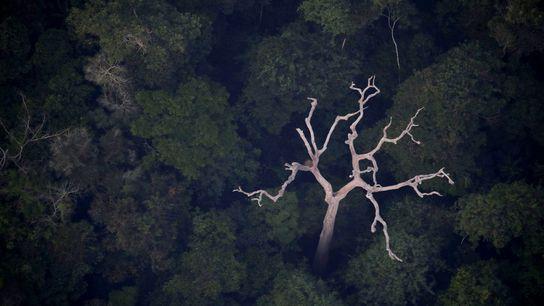 Uma vista aérea da Amazónia perto de Porto Velho, no estado brasileiro de Rondônia, no dia ...