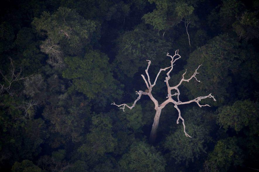Uma vista aérea da Amazónia perto de Porto Velho, no estado brasileiro de Rondônia, no dia 21 de agosto de 2019.