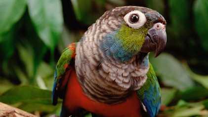 Amazónia: Efeitos dos Incêndios na Vida Selvagem