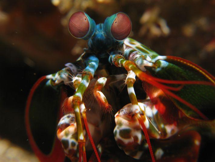 Os olhos da lagosta-boxeadora vêem a luz circularmente polarizada.