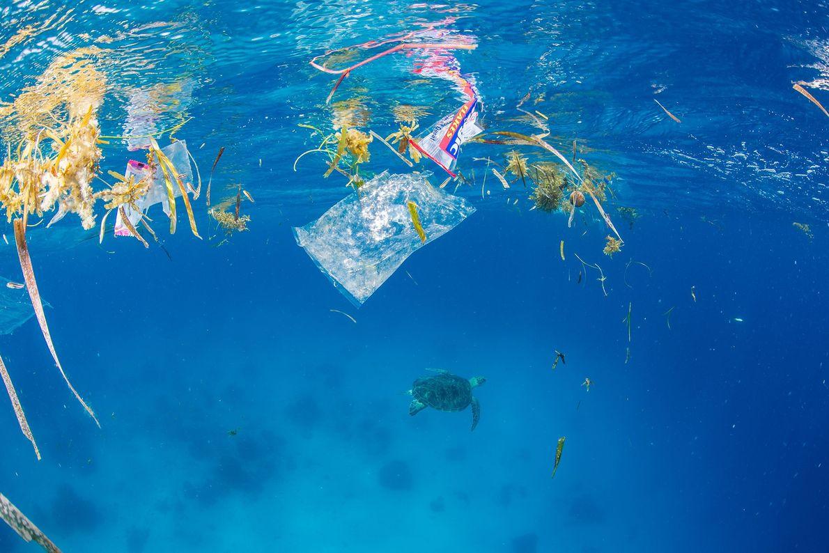 Flora marinha mistura-se com embalagens plásticas à superfície da água.
