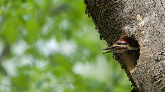 animals-provide-habitat