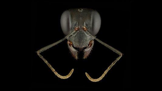 Estes 'retratos' de formigas revelam como estes insetos são belos e diversos
