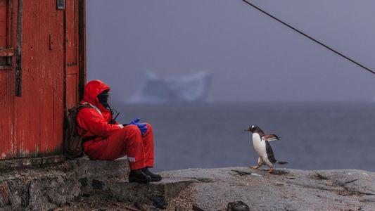 A Antártida É o Último Continente Sem COVID-19 – os Cientistas Querem que Assim se Mantenha