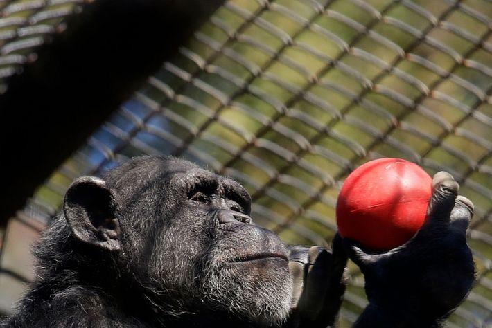 Vacinação no zoo de Oakland
