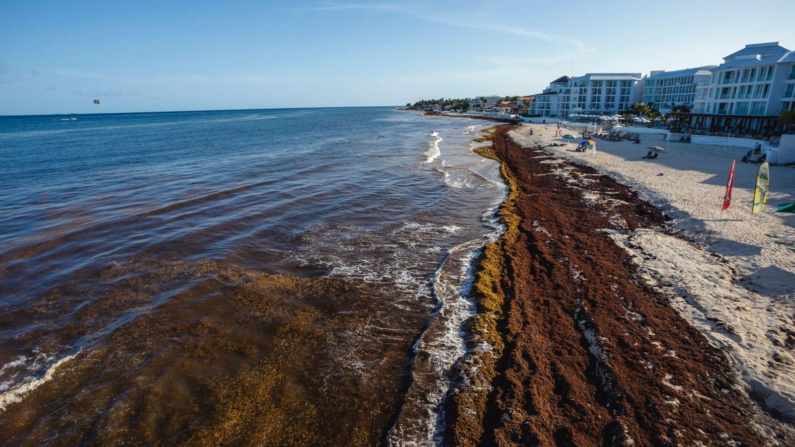 Sargaço contamina as praias do Caribe mexicano